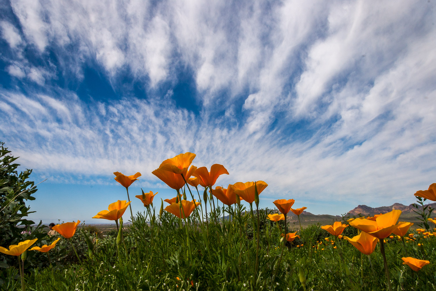 Poppies and clouds from the Superstition Mountains